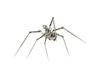 蜘蛛间谍 免版税库存图片