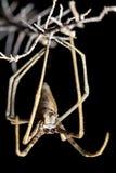 蜘蛛,网铸件,与在大前面饰面的焦点注视 库存图片