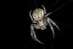 蜘蛛 宏指令 免版税库存图片