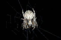蜘蛛 宏指令 免版税库存照片