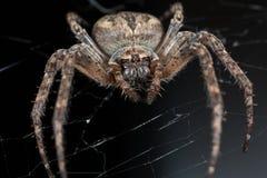 蜘蛛 宏指令 免版税图库摄影
