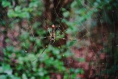蜘蛛; 对小昆虫和野生生物的掠食性动物 免版税库存图片