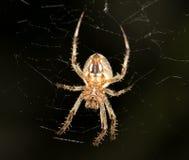 蜘蛛 2009朵超级花宏观的夏天 免版税图库摄影