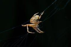 蜘蛛 2009朵超级花宏观的夏天 图库摄影