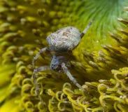 蜘蛛 2009朵超级花宏观的夏天 库存照片