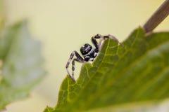蜘蛛3的眼睛 库存照片