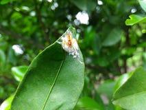 蜘蛛 库存照片