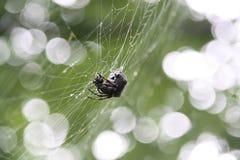 蜘蛛 免版税库存图片