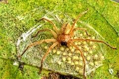 蜘蛛5 免版税库存照片
