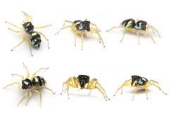 蜘蛛 图库摄影