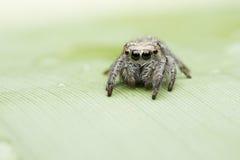 蜘蛛 免版税图库摄影