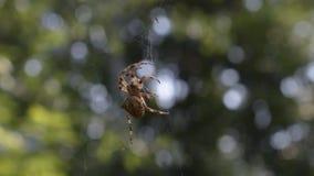蜘蛛 股票录像