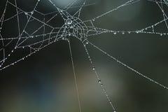 蜘蛛` s网 免版税库存图片