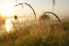 蜘蛛` s网 免版税图库摄影