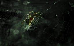 蜘蛛hd墙纸 免版税图库摄影