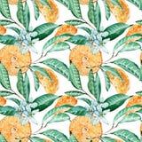 蜜桔无缝的样式 橙色裁减、花和叶子 在白色背景隔绝的水彩例证 库存例证