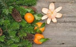 蜜桔果子和圣诞树分支 普通话 图库摄影