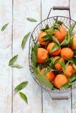 蜜桔桔子,普通话,柑桔,与叶子的柑橘水果在灰色背景的篮子 橘子 库存图片