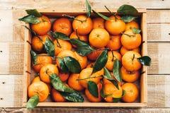 蜜桔桔子,柑桔,与绿色叶子的柑橘水果在轻的木背景的一个木箱与拷贝空间 图库摄影