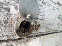 蜜蜂拥挤在入口对老蜂房 图库摄影