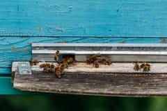 蜜蜂飞行入蓝色蜂房 库存图片