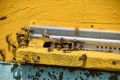 蜜蜂飞行在入口到蜂房 蜂房的盘子 对蜂房的孔入口 免版税库存图片