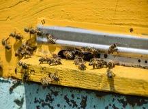 蜜蜂飞行在入口到蜂房 蜂房的盘子 对蜂房的孔入口 库存照片