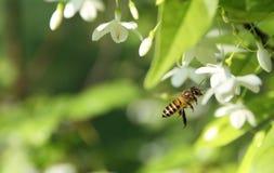 蜜蜂飞行 免版税图库摄影