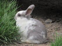 蜜饯兔子 库存照片