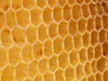 蜡六角蜂蜂窝 免版税图库摄影