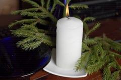 蜡烛光和杉树 库存照片