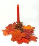 蜡烛生叶槭树 免版税图库摄影