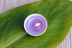 蜡烛绿色叶子紫色 库存照片