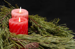 蜡烛绿色结构树 图库摄影