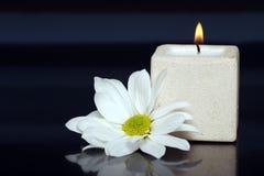 蜡烛雏菊轻 免版税图库摄影