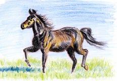 蜡笔例证,在大草原的马 免版税库存图片