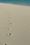 蜡膜-海滩 库存图片