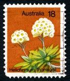 蜡菊属植物Thomsonii澳大利亚邮票 免版税库存照片
