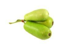 蜡金瓜或匏 免版税库存图片