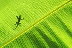 蜥蜴剪影 库存照片