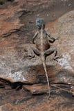 蜥蜴南部的结构树 免版税库存图片