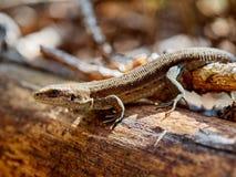 蜥蜴在树的森林里 免版税库存图片