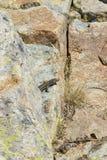 蜥蜴坐石头 免版税库存照片