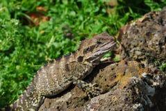 蜥蜴妖怪 免版税库存照片