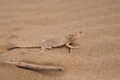 蜥蜴沙子 免版税库存照片