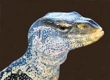 蜥蜴监控程序华丽的尼罗 免版税库存图片