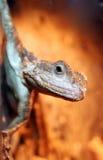 蜥蜴纵向 免版税库存图片