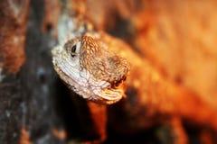 蜥蜴纵向 库存图片