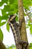 蜥蜴结构树 免版税库存图片