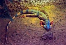 蜥蜴阳光 库存照片